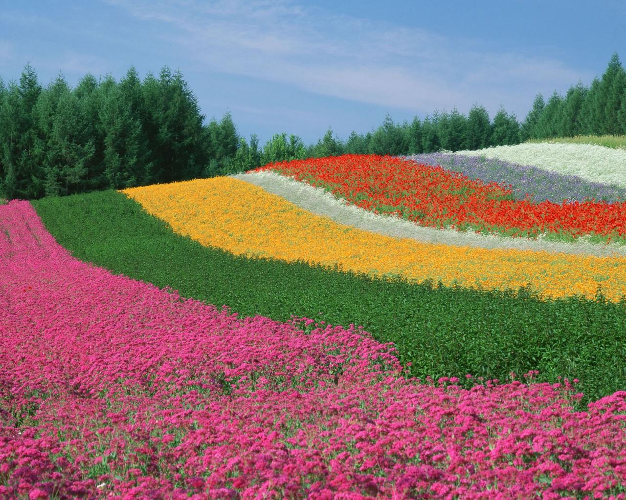Saul 22 april 2012 linguaggio celeste for Flowers for japanese garden